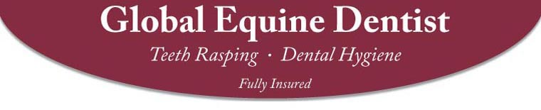 Global Equine Dentist: Teeth Rasping - Dental Hygiene - Fully Insured