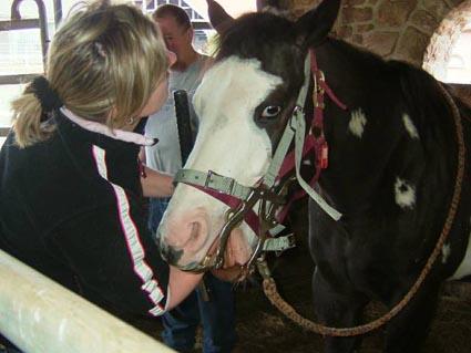 Global Equine Dentist: Examination technique